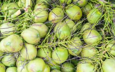 fresh coconuts texture or background